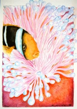 "Clown & Anemone • watercolor • 8""x10"""