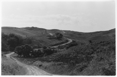Rural Road near Momi, Viti Levu, Fiji