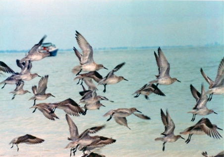 seabirds-florida-sm