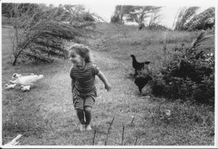 Chicken dance (Fiji)